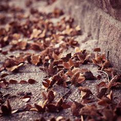 Toamna mi se parea oarecum trista. Tropaiam insa cu mare bucurie pe frunzele adunate pe trotuar, in drum spre scoala.