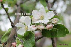 Epleblomst 1 - foto A4 str. A4, Plants, Pictures, Plant, Planets