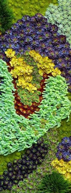 Wonderful Types Of Urban Gardening Ideas. Sensational Types Of Urban Gardening Ideas. Vertical Succulent Gardens, Succulent Wall Art, Succulent Gardening, Succulent Planters, Indoor Gardening, Growing Succulents, Cacti And Succulents, Planting Succulents, Cactus Plants