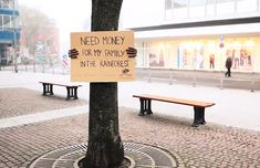 Great fundraising idea for rainforest protection