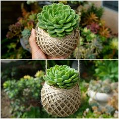Unique Kokedama Ball Ideas for Hanging Garden Plants Propagating Succulents, Succulent Gardening, Cacti And Succulents, Planting Succulents, Organic Gardening, Gardening Blogs, Flower Gardening, Garden Art, Garden Plants