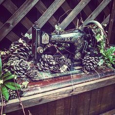 The wife is a bit good at gardening  vintage sewing machine purchase from strawberry fields car boot - Best buy ever for 10! #carboot #strawberryfields #bridlington #gardening #sewingmachine #vintage #old #upcycle #creative #garden #gardendesign #greenfingers #planting #outdoor #autumn #fall #ivy #overgrown #nature #reclaimed