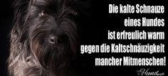 Die kalte Schnauze eines Hundes... ⋆ Hunde