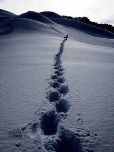Raquetas de nieve..