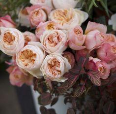 Florabundance Design Days 2016 - Edith and Juliet David Austin Garden Roses
