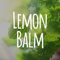 Lemon Balm: A Calming Alternative To Bone-Damaging Anti-Anxiety Drugs