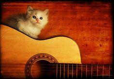 chaton guitare musique