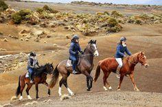 Amanda Wilson vicki Wilson and Kelly Wilson at the Kaimanawa ranges on there Kaimanawas Amanda Wilson, Wilson Sisters, Natural Horsemanship, Wild Spirit, Horse Photos, Horse Tack, New Zealand, Equestrian, Cute Dogs