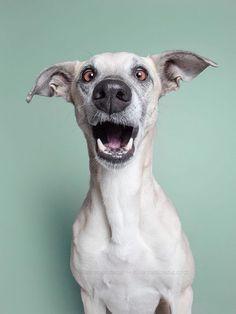 Série de fotos captura as faces mais engraçadas dos cães