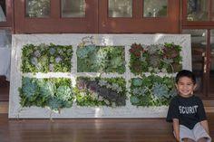 Garden inspirations. 1m x 1.9 mH living wall.
