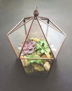 Terrariums Diy, How To Make Terrariums, Succulent Gardening, Succulent Terrarium, Ficus Ginseng, Sand Glass, Small Cactus, Terraria, Senior Living