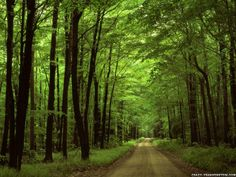 Allegheny national forest Pennsylvania
