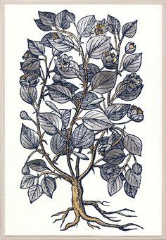 Historical Botanical 1 | Natural Curiosities