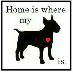#Bully Love #English #Bull #Terrier #Dog #Terriers #Creative #Dogs #Art #Silhouette