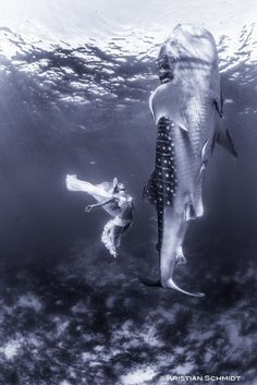 Stunning Whale Shark Photos Aim to Help At-Risk Species   Raw File   Wired.com