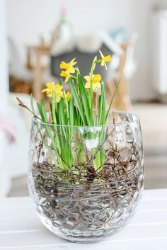 3 DIY ideas on how to stage your spring bloomers, interior, pomponetti. Fleurs Diy, Sun Loving Plants, Easter 2021, Welcome Spring, Diy Décoration, Deco Table, Daffodils, Spring Flowers, Flower Decorations
