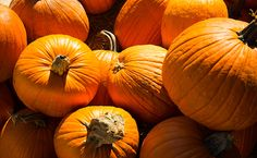 5 Ways Your Pumpkin Spice Addiction Can Actually Help You Lose Weight