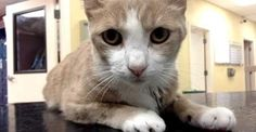 Cat Gets Lifesaving Blood Transfusion….from a Dog! | The Catington Post