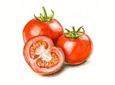 Watercolor Fruit, Fruit Painting, Watercolor Paintings, Watercolour, Fruits Drawing, Food Drawing, Tomato Drawing, Bio Food, Poster Color Painting