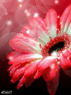 gif animations Flowers Gif, Love Flowers, Beautiful Flowers, Gifs, Glowing Flowers, Animated Heart, Glitter Gif, Gif Animé, Flowers