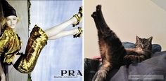 Funny Pictures Of Cats In The Awkward Poses Of Fashion Models - DesignTAXI.com