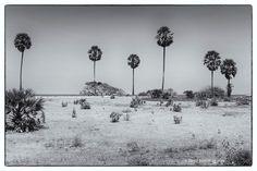 Trincomalee © OBS