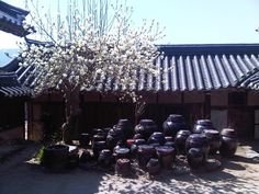 Spring has come in the traditional Korean house