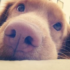 Watching you, up close, dog style