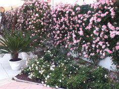 vorrei regalarti delle rose .... bastano? #dillo
