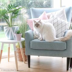 """""""Go on tell me to get off the chair. I dare you!""""  Happy #Caturday all. Have a lovely day and to my fellow Melbourne peeps stay safe and cool in this heat and make sure your furry friends have plenty of water  #whitefoxstyling"""