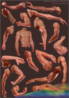 Arm Anatomy, Anatomy Poses, Body Anatomy, Anatomy Art, Human Reference, Drawing Reference Poses, Anatomy Reference, Drawing Tips, Drawing Tutorials