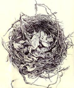 "Sketchbook Drawing ""Birds Nest"" Pen on paper One my most favorite sketchbook drawings Eric Hosford - Sketchbook Drawings, Bird Drawings, Art Sketches, Drawing Birds, Small Birds, Pet Birds, Birds Nest Image, Nest Images, Bird Nest Craft"