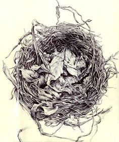 """""""Birds Nest"""" Pen on paper One my most favorite sketchbook drawings Eric Hosford"""