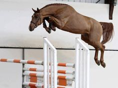 My horse does this every time we jump. He jumps way taller then the bar. It's like he is trying to be a unicorn.