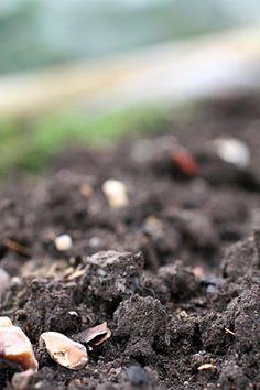 Soil image at link