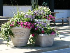 Patio Flower Pots Sportwholehousefansco inside proportions 1024 X 768 Ideas For Planters On Patios - Think about the form of your home and whether you Outdoor Flowers, Patio Planters, Popular Flowers, Plants, Driveway Landscaping, Patio Flowers, Artificial Plants, Flower Pots Outdoor, Potted Plants Outdoor