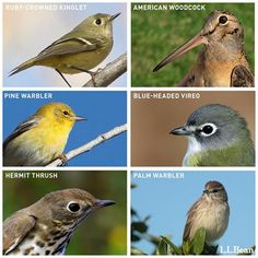 Though we'll miss the snow, we're excited to see flocks of birds return in the spring. Will you recognize these Northeastern birds when they come home?