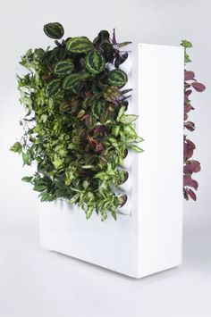 Green wall for interior design! Your own vertical garden in office, mall or house. For more information check http://gardenspot.pl
