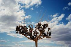 Shoe Tree, Slab City, California, April 2012.