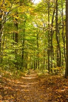 French Creek State Park, PA    35 mi of hiking - trails ranging from 1-8 mi. Nice for successive day hikes