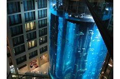 The Aqua Dom is NOT your typical hotel fish tank…