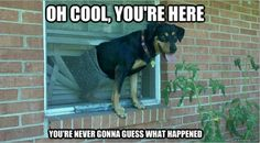 my dog's done this too many times