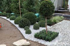Ogród z lustrem - strona 71 - Forum ogrodnicze - Ogrodowisko Front Garden Landscape, Garden Landscaping, Rock, Plants, Front Yard Landscaping, Skirt, Locks, The Rock, Rock Music