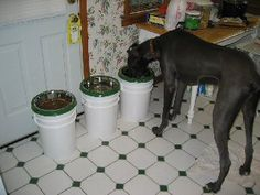 Great Dane Rescue in Ohio: Harlequin Haven Great Dane Rescue -- Canine Care -- DIY Elevated Feeders on a Budget