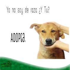 Tenencia responsable de mascotas, Adopta.
