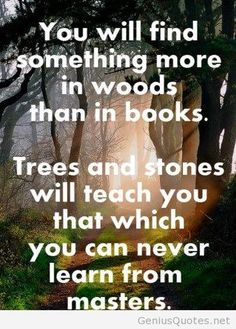 you-will-find-something-more-in-woods-than-in-books-nature-quote