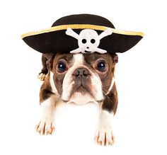 Best not be measly with those treats or ye be swabbing the poop deck! Aaarrrgh. #TalkLikeaPirateDay