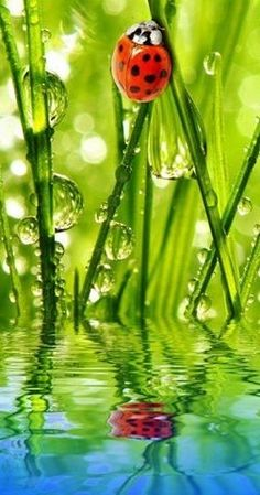 ideas plants photography nature dew drops for 2019 Beautiful Creatures, Animals Beautiful, Cute Animals, Beautiful Bugs, Amazing Nature, Lady Bug, Photo Animaliere, A Bug's Life, Bugs And Insects