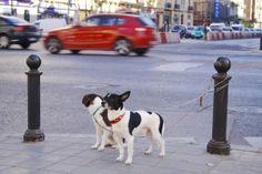 En esta imagen podemos observar dos perros atados esperando en la calle. Con esta foto, podemos explicar al alumnado que es necesario cuidar a los animales y todo lo que debemos y no debemos hacer.