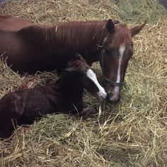 2016-02-20 | Love at first sight! First foal of the year is a filly!